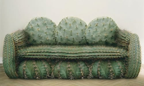 Funny Cactus Couch