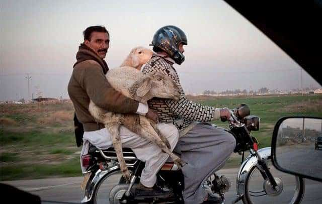 Weird Animal Transport System That Will Shock You