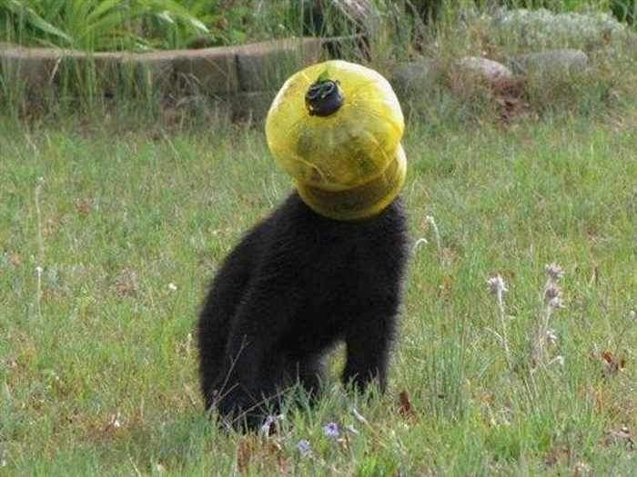 21 Animals Stuck In Odd Places But Don't Seem To Mind-06