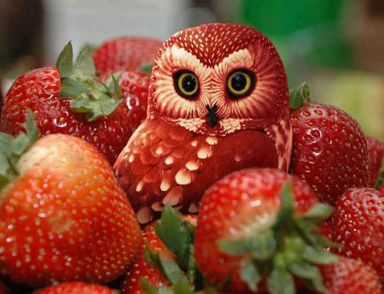 amazing-funny-fruit-art