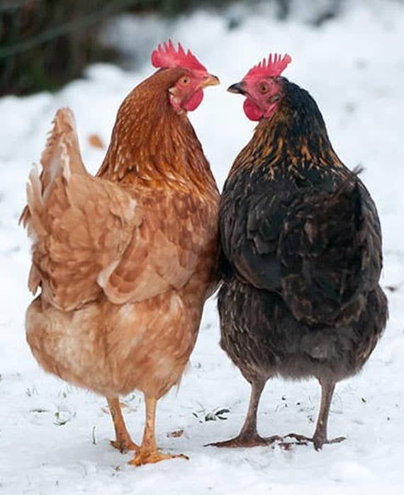 Animals Also Loves Each Other