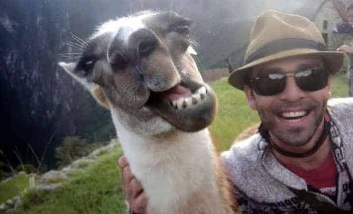 51 Animals Who Don't Want to Be A Part of Your Ridiculous Selfie -07