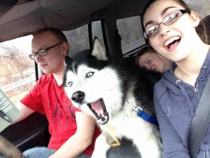 51 Animals Who Don't Want to Be A Part of Your Ridiculous Selfie -08
