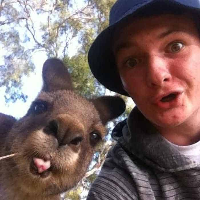 51 Animals Who Don't Want to Be A Part of Your Ridiculous Selfie -09