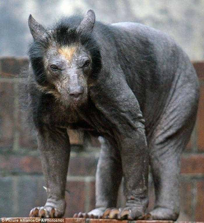 Unseen Funny Bald Bear Pictures of The Day -01