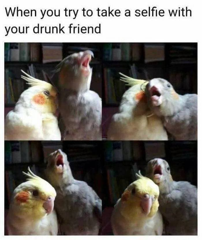 40+ Best Drunk Memes And Fail Drunk People Of The Day-40
