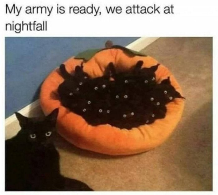 29 Best October Memes Of The Day-10