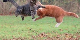 Cats Fighting Like Humans – 4 Funny Pics