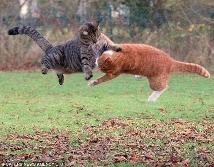 Cats Fighting Like Humans - 4 Funny Pics -01
