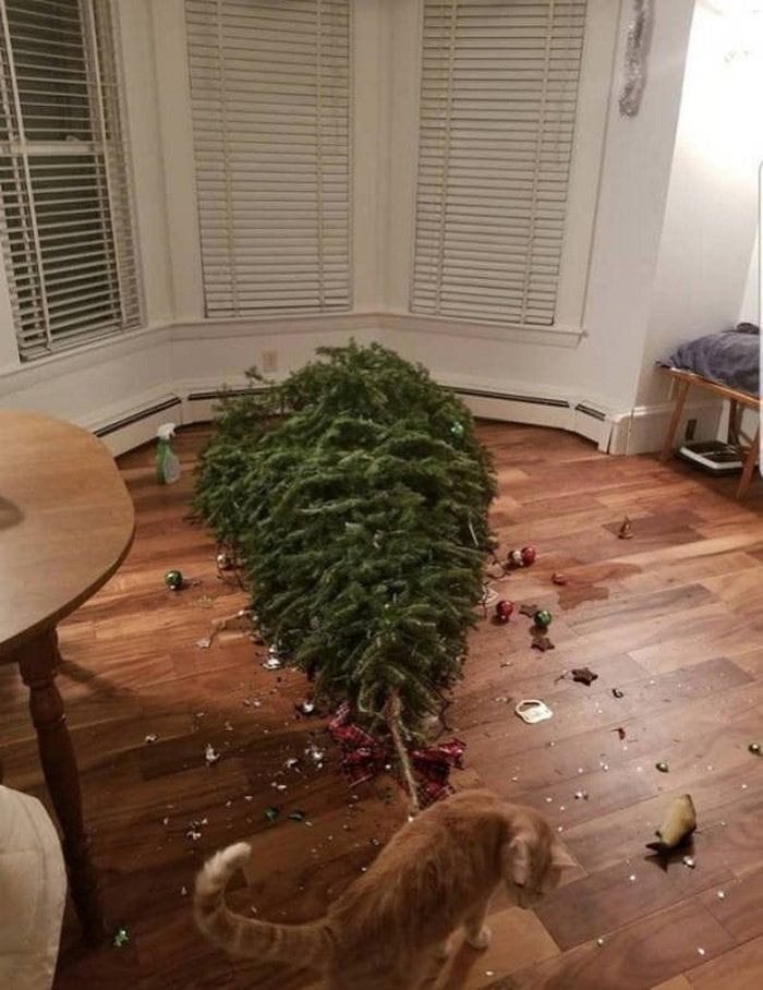 30 Christmas Fails That Will Ruined Your Festive Mood-20