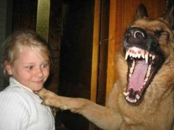 8 Pics of Crazy Funny Animals That Are Hilarious -02