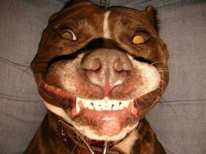 8 Pics of Crazy Funny Animals That Are Hilarious -08