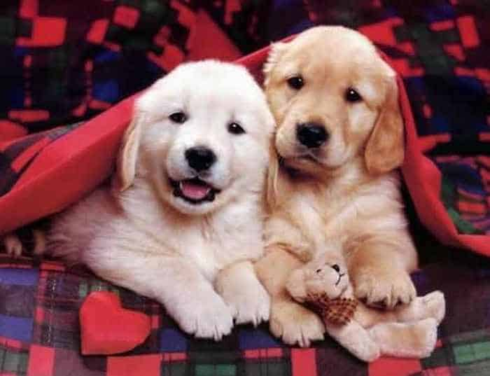 50 Pics of Dogs That Are Best Friends and You Never Seen Before -01
