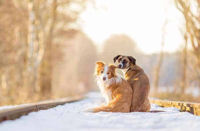 50 Pics of Dogs That Are Best Friends and You Never Seen Before -02