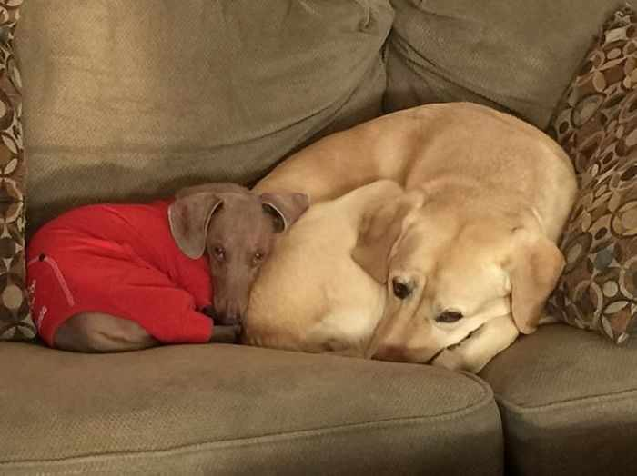 50 Pics of Dogs That Are Best Friends and You Never Seen Before -03