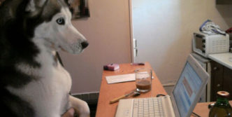 Crazy Dog Likes Yahoo Mail