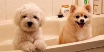 Funny Dogs Before and After Bath