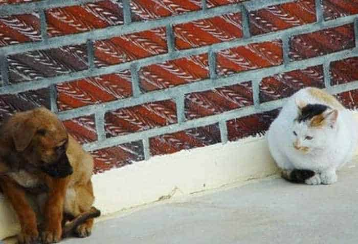 Dogs And Cats Looks Very Funny - 15 Photos -01