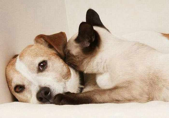 Dogs And Cats Looks Very Funny - 15 Photos -03
