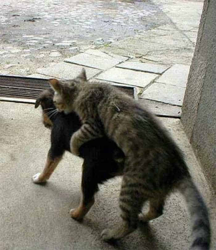 Dogs And Cats Looks Very Funny - 15 Photos -08
