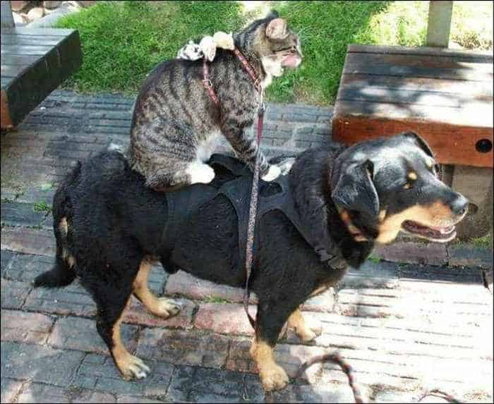 Dogs And Cats Looks Very Funny - 15 Photos -11
