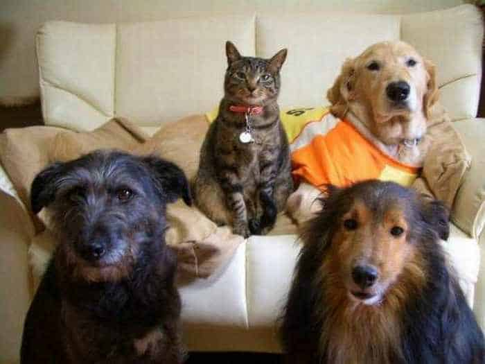 Dogs And Cats Looks Very Funny - 15 Photos -13