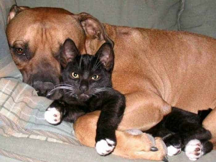 Dogs And Cats Looks Very Funny - 15 Photos -15
