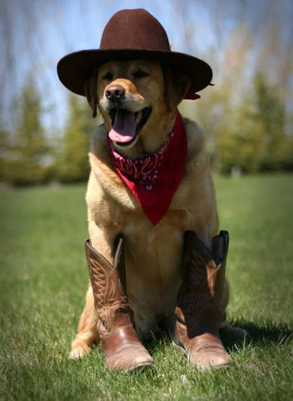 Meanwhile Dogs Of America That Are Stylist