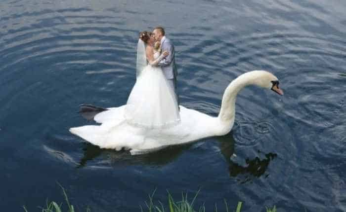 44 Funny Epic Fail Wedding Pictures That Will Make You Laugh -04