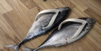 Funny Unseen Fish Slippers Will Blow Your Mind