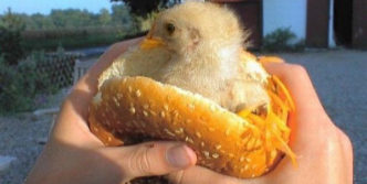 Funny And Weird Chicken Burger