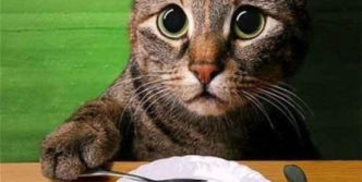 Epic Fail Cat's Lunch Order Will Make You Laugh
