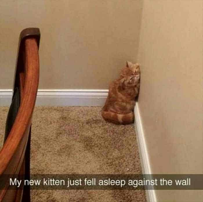 Funny Animal Picture Wackyy Picdump of the Day 1 - 40 Pics - 02