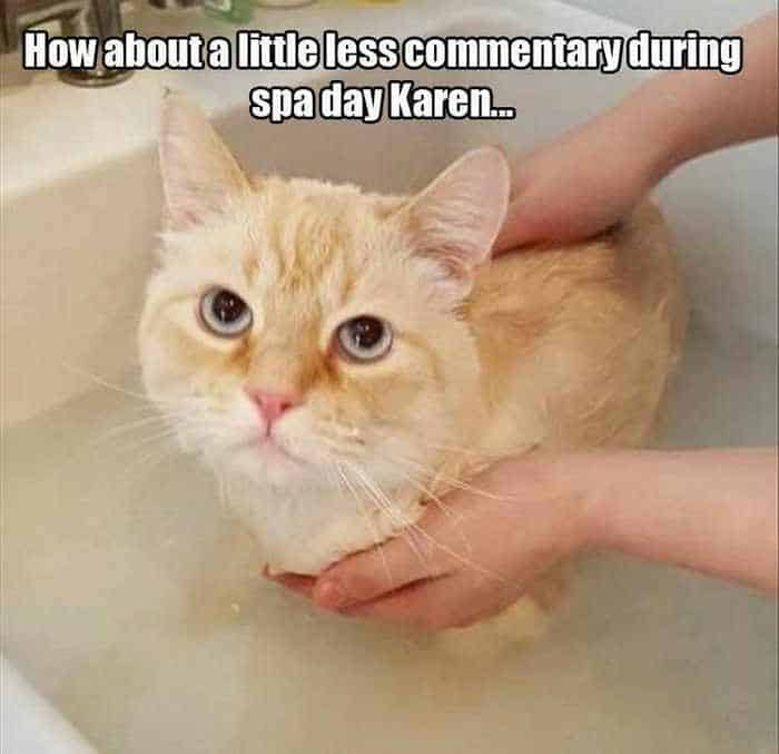 Funny Animal Picture Wackyy Picdump of the Day 1 - 40 Pics - 03