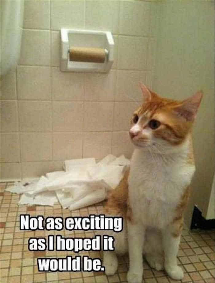 Funny Animal Picture Wackyy Picdump of the Day 1 - 40 Pics - 13