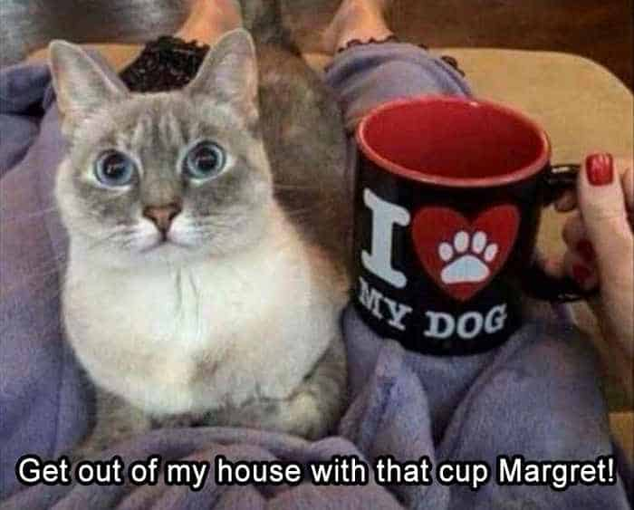 Funny Animal Picture Wackyy Picdump of the Day 1 - 40 Pics - 15