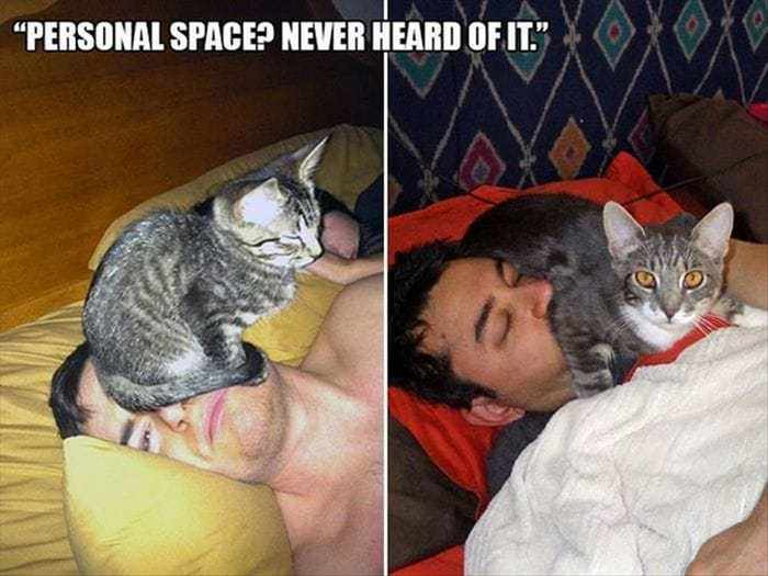 Funny Animal Picture Wackyy Picdump of the Day 1 - 40 Pics - 16