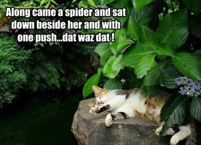 Funny Animal Picture Wackyy Picdump of the Day 1 - 40 Pics - 19