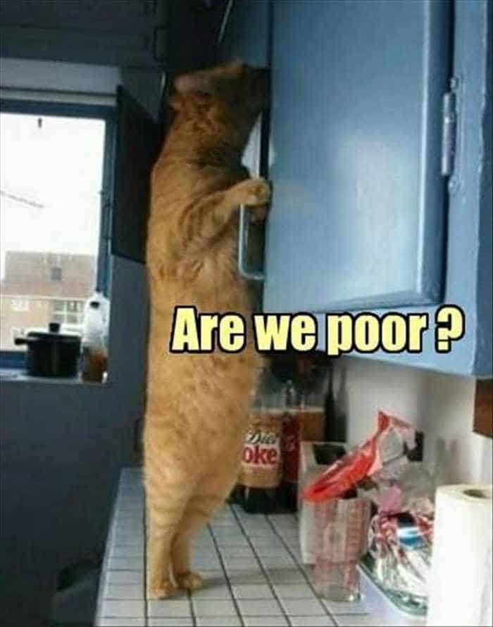 Funny Animal Picture Wackyy Picdump of the Day 2 - 22 Pics-06