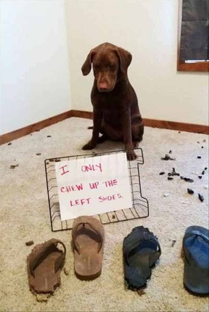 Funny Animal Picture Wackyy Picdump of the Day 2 - 22 Pics-13