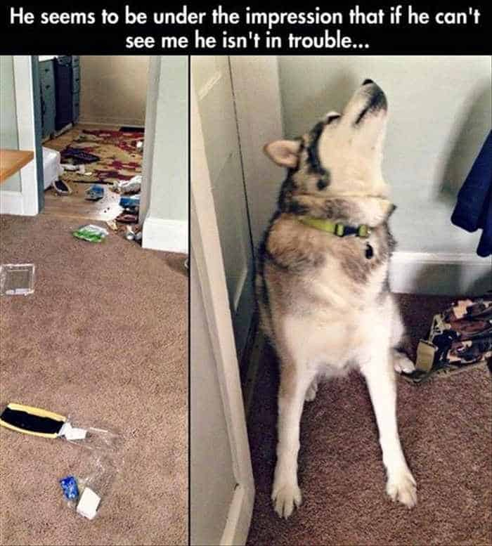 Funny Animal Picture Wackyy Picdump of the Day 2 - 22 Pics-15