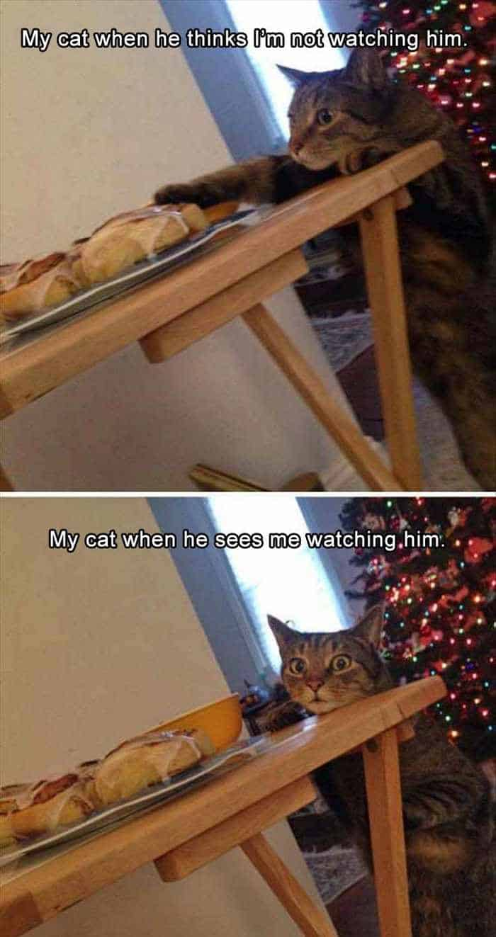 Funny Animal Picture Wackyy Picdump of the Day 2 - 22 Pics-16