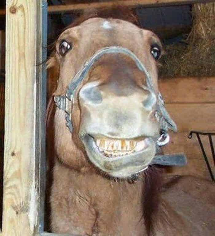 12 Funny Laughing Animals That Will Amaze You -02