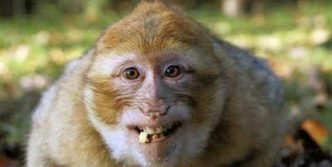 12 Funny Laughing Animals That Will Amaze You