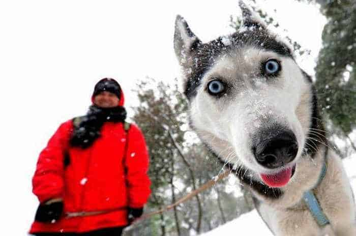 11 Curious Animals That Will Make You Smile -03