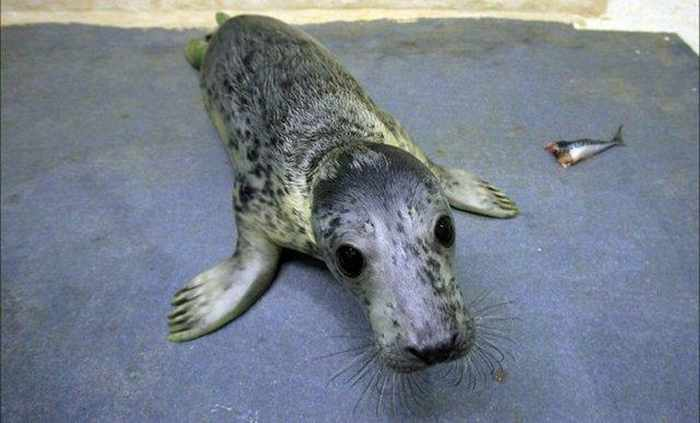 11 Curious Animals That Will Make You Smile -04