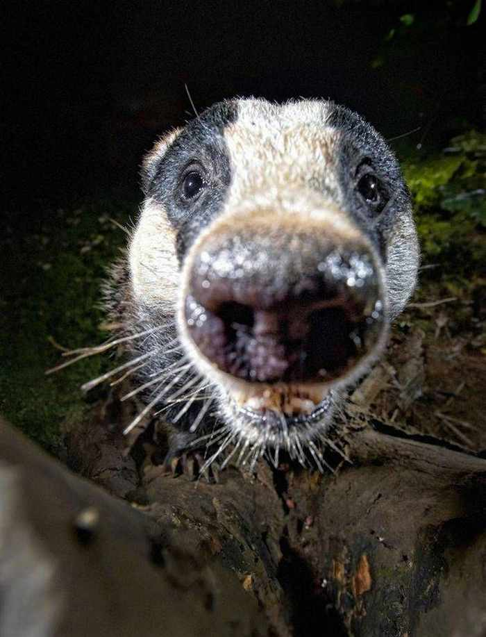 11 Curious Animals That Will Make You Smile -07