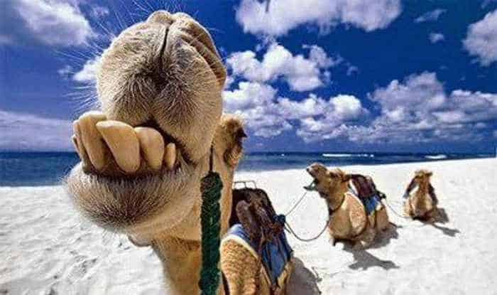 12 Funny Laughing Animals That Will Amaze You -08