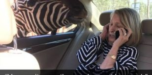 45 Funny Animals That Like To Appear On Snapchat