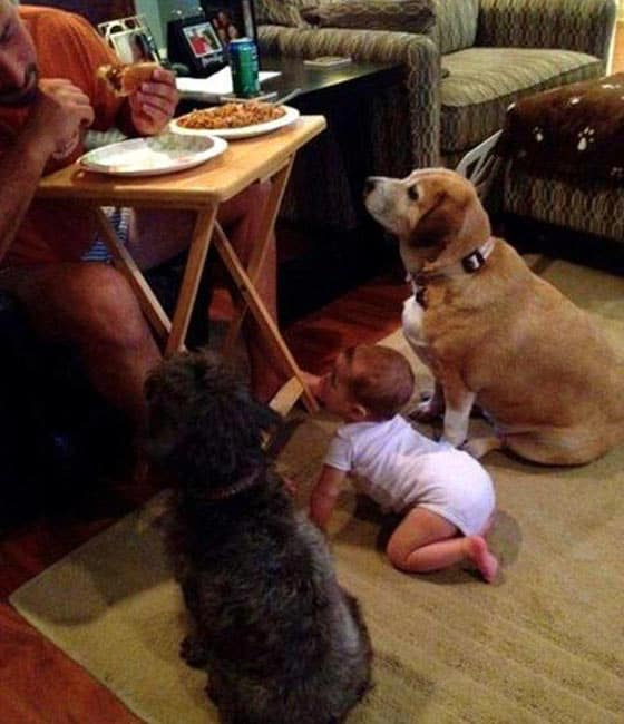 Funny Baby And Dogs Looking For Food in Unique Style